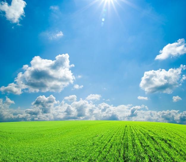 Pole ze słonecznym niebieskim niebem