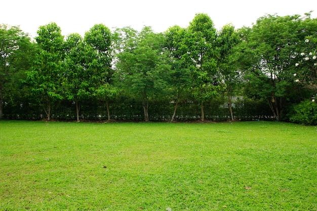 Pole zielona trawa i park drzew