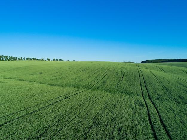 Pole zielone i błękitne niebo