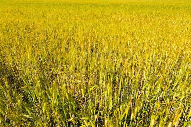 Pole zielonej trawy w ciągu dnia