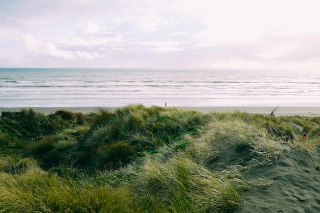 Pole zielonej trawy w pobliżu morza pod pięknym pochmurnym niebem