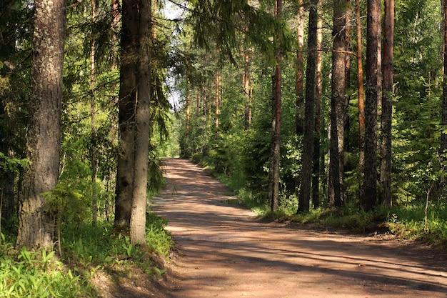 Polną drogą przez las w letni poranek.
