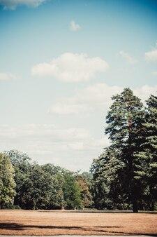 Polna łąka drzewa sosny niebo chmury kopia przestrzeń