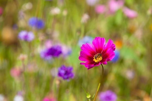 Polne kwiaty na łące w słoneczny dzień. strzał z selektywną ostrością