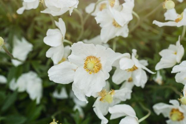 Polne kwiaty na polu w świetle słonecznym.