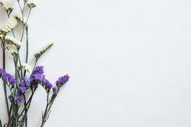 Polne kwiaty po lewej stronie na wiosnę