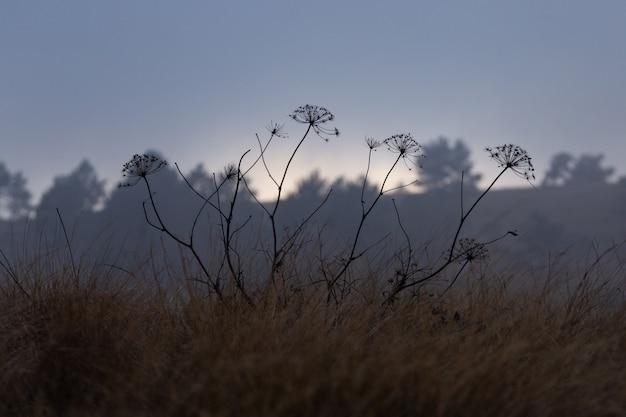 Polne kwiaty rosnące w polu