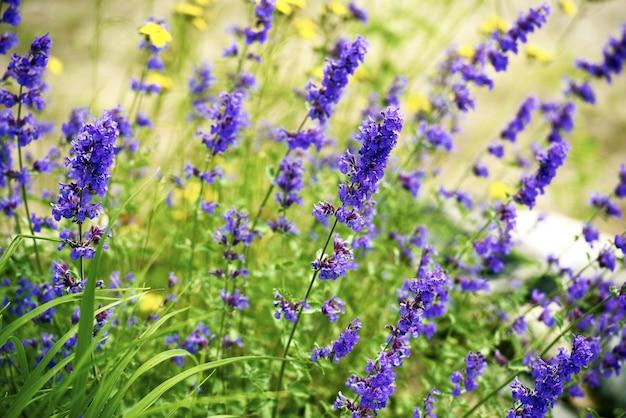 Polne kwiaty w minnesocie