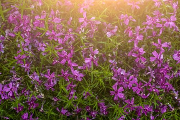 Polne kwiaty w słońcu koncepcja letnich.