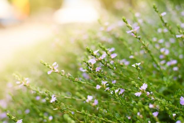 Polne kwiaty wiosenne w słońcu