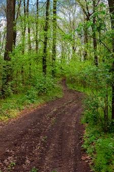 Polnej drodze w lato leśnej wsi