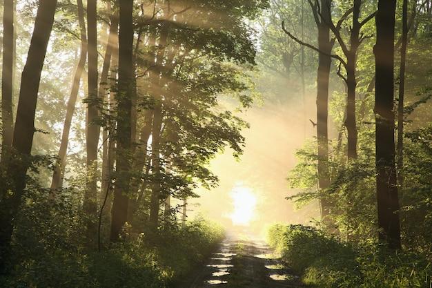 Polnej drodze wśród klonów po deszczu w mglisty wiosenny poranek