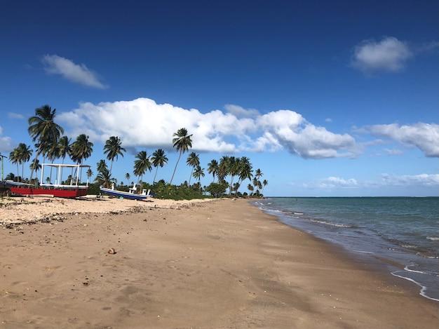 Północno-wschodnia brazylijska plaża błękitne niebo z chmurami palmy kokosowe łódki na piasku i morzu
