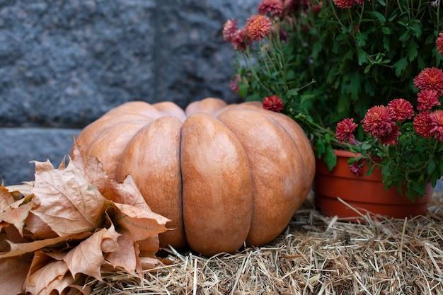 Pomarańczowa dynia, żółte suche liście i jesienne kwiaty chryzantemy na belach słomy na halloween.