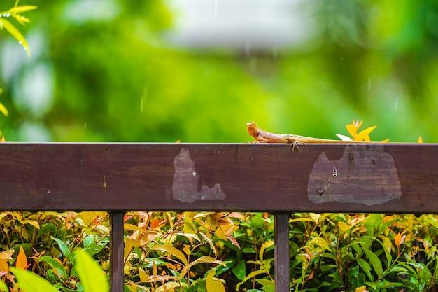 Pomarańczowa jaszczurka na stalowym ogrodzeniu w padającym deszczu z zielonym tłem rozmycie.