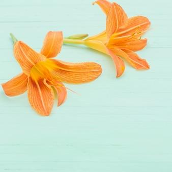 Pomarańczowa lilia na powierzchni drewnianych