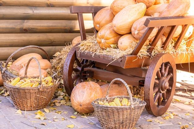 Pomarańczowe dynie na rynku rolników na świeżym powietrzu łatka z dyni skopiuj miejsce na tekst