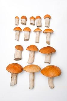 Pomarańczowe grzyby borowikowe o różnych rozmiarach na białym tle