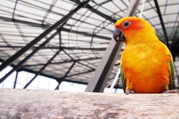 Pomarańczowe kakadu w klatce wygląda na szczęśliwego.