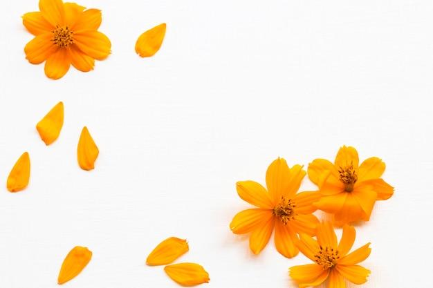 Pomarańczowe kwiaty aranżacja kosmosu w stylu pocztówki