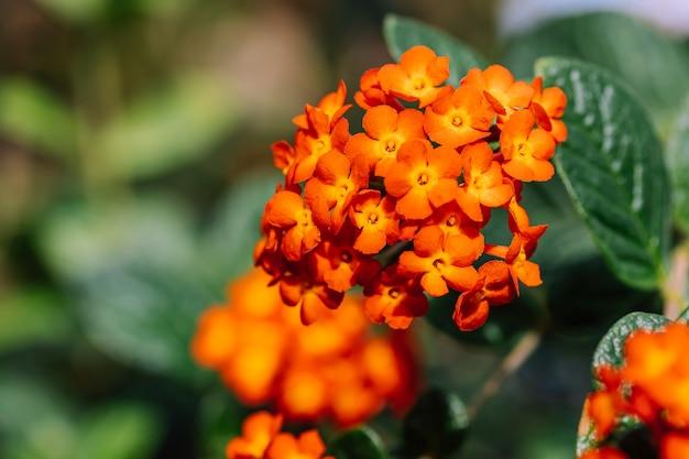 Pomarańczowe kwiaty tropikalne w ogrodzie