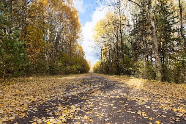 Pomarańczowe liście drzew jesienią, przyroda w parku, specyfika jesieni na asfaltowej drodze
