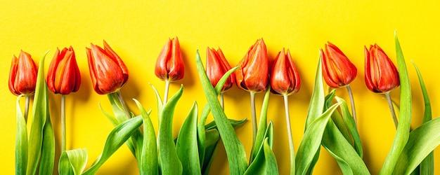 Pomarańczowe tulipany na żółtej powierzchni, wielkanoc. urodziny, dzień matki pozdrowienie koncepcja z miejsca na kopię. widok z góry, płaski układ. transparent