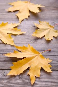 Pomarańczowi jesień liście na popielatym stole. święto dziękczynienia