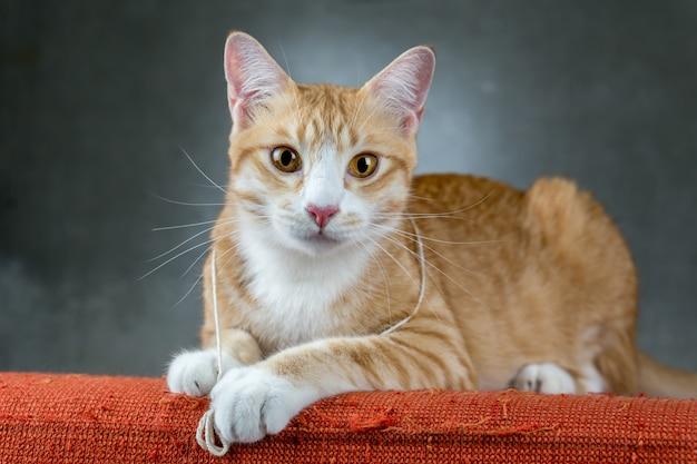 Pomarańczowi koty siedzi na kanapie w pokoju.