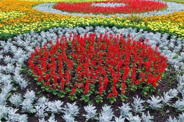 Pomarańczowo-żółte kwiaty rośliny aksamitka, czerwona szałwia szkarłatna na kwietniku. lato w tle.
