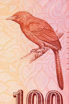 Pomarańczowy babbler portret ze sri lanki za pieniądze