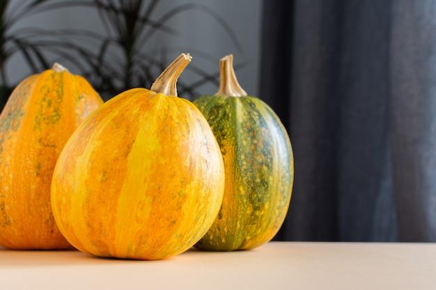 Pomarańczowy dojrzałych dyni zbliżenie, świeże organiczne warzywa z ogrodu