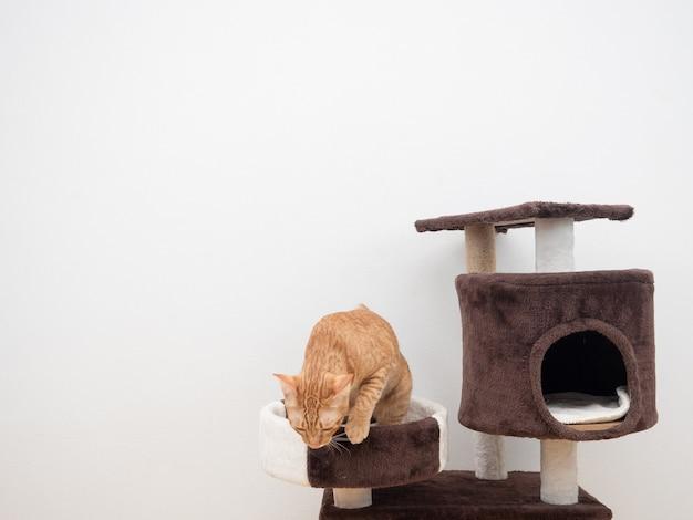 Pomarańczowy kot na mieszkaniu dla kota na białym tle