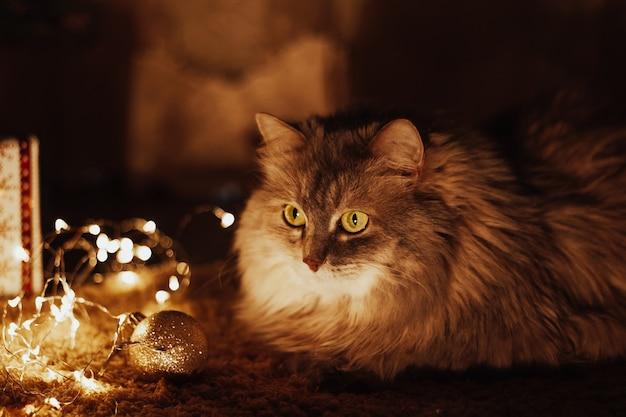 Pomarańczowy kot na podłodze. kot leży na puszystym dywanie. ciepły, przytulny zimowy wieczór