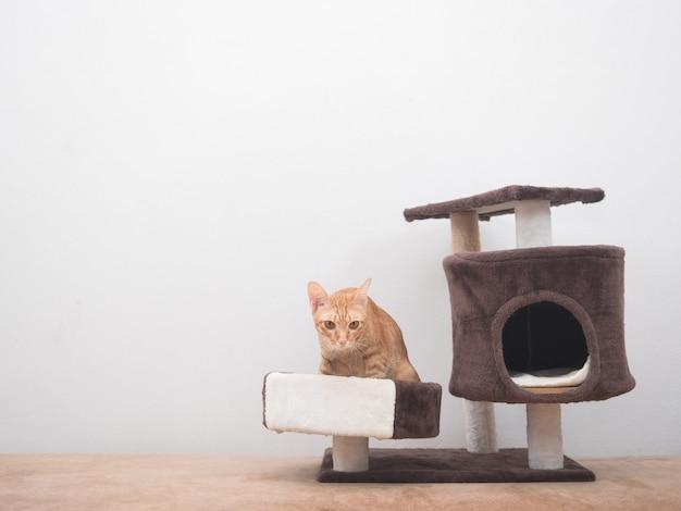 Pomarańczowy kot siedzący w mieszkaniu dla kotów relaksuje się na tle białej ściany