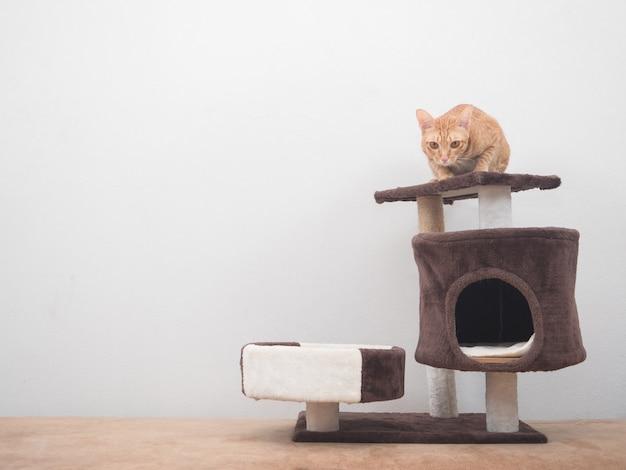 Pomarańczowy kot siedzi na głowie kota w mieszkaniu, patrząc na kamerę w domu na tle białej ściany