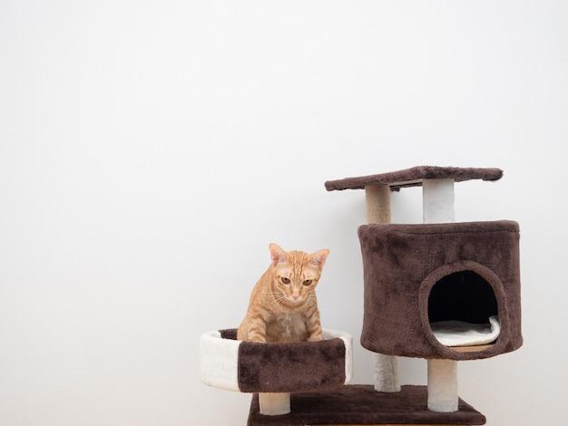 Pomarańczowy kot siedzi na kota mieszkanie na białym tle