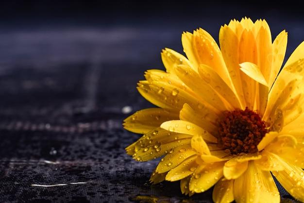 Pomarańczowy kwiat na białym tle