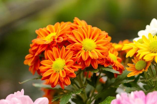 Pomarańczowy kwiat wzór tła rozmycie