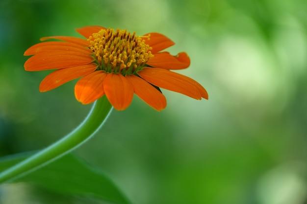 Pomarańczowy kwiat z bliska