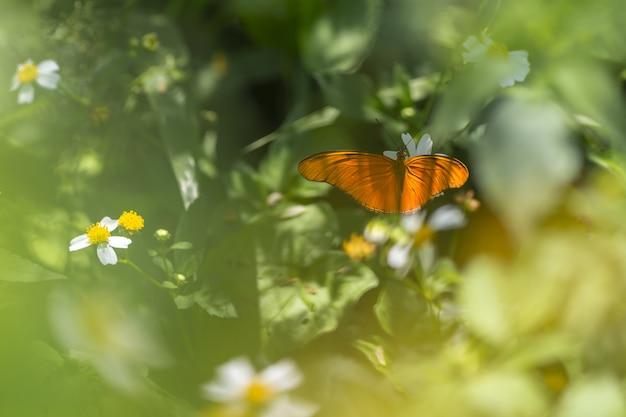 Pomarańczowy motyl siedzi na kwiatku