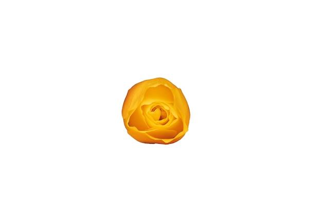 Pomarańczowy pączek róży na białym tle. piękny kwiat do projektowania. widok z góry. zdjęcie wysokiej jakości