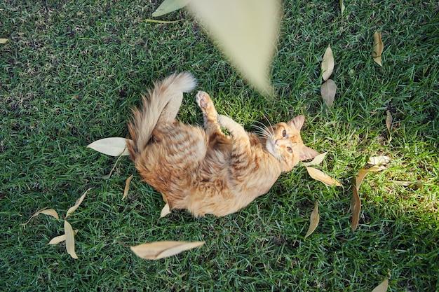 Pomarańczowy pręgowany kot, odpoczywając na zielonej trawie, wśród suchych liści. weź nad głową.