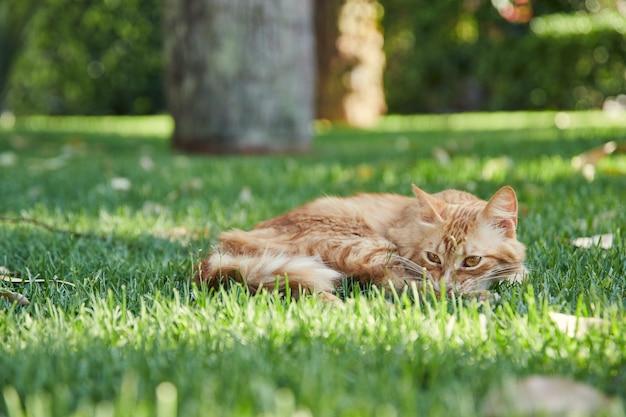 Pomarańczowy pręgowany kot, odpoczywając na zielonej trawie.
