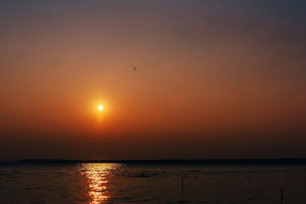 Pomarańczowy wschód słońca nad rzeką z latającym ptakiem i jaskrawym słońcem nad wodą