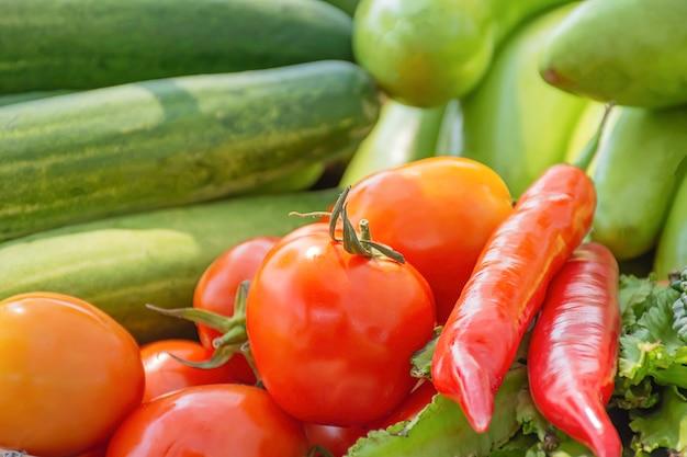 Pomidor, ogórek, bakłażan i czerwone chili rodzima roślinność w tajlandii
