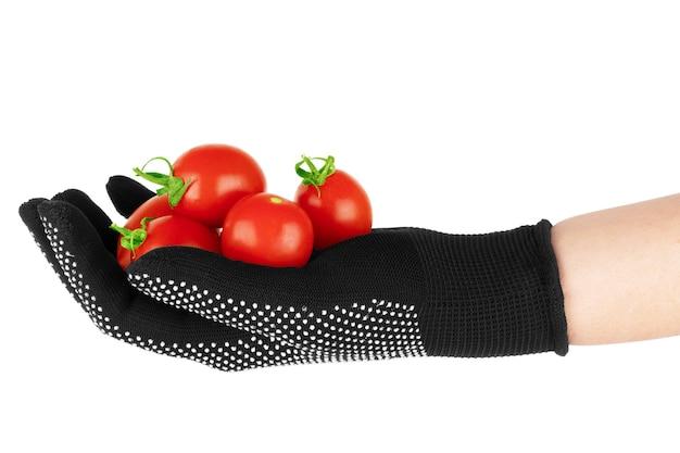 Pomidory w ludzkiej dłoni pojedynczo na białym tle