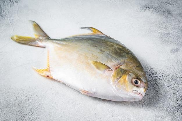 Pompano świeżej surowej ryby na stole kuchennym