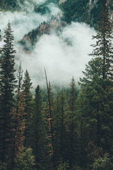 Ponura mglista sceneria ze skalistą górą za drzewami iglastymi w niskiej chmurze. atmosferyczny widmowy las w gęstej mgle wśród skał. alpejski tajemniczy krajobraz wczesnym rankiem. hipster, dźwięki w stylu vintage