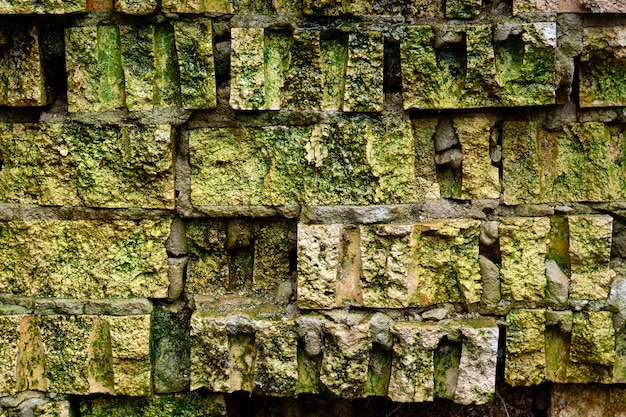 Ponura tekstura starej cegły pokrytej zielonym mchem i pleśnią, koncepcja horroru.